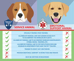 Service Dogs Vs Emotional Support Dogs Vs Therapy Dogs Advanced Canine Techniques